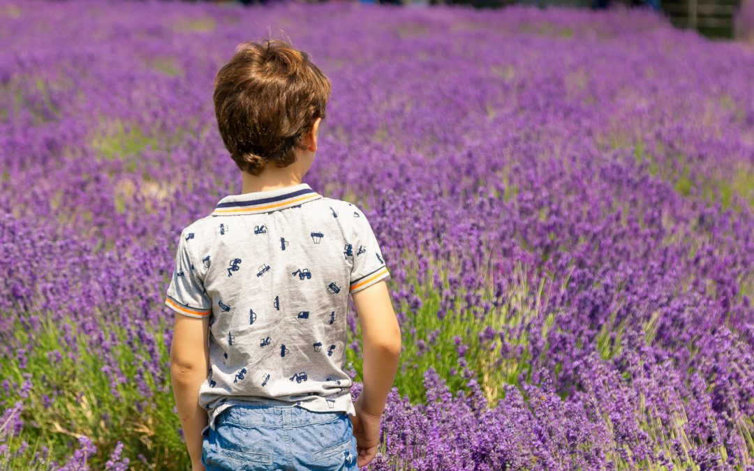 Lavender field photoshoot, South West London