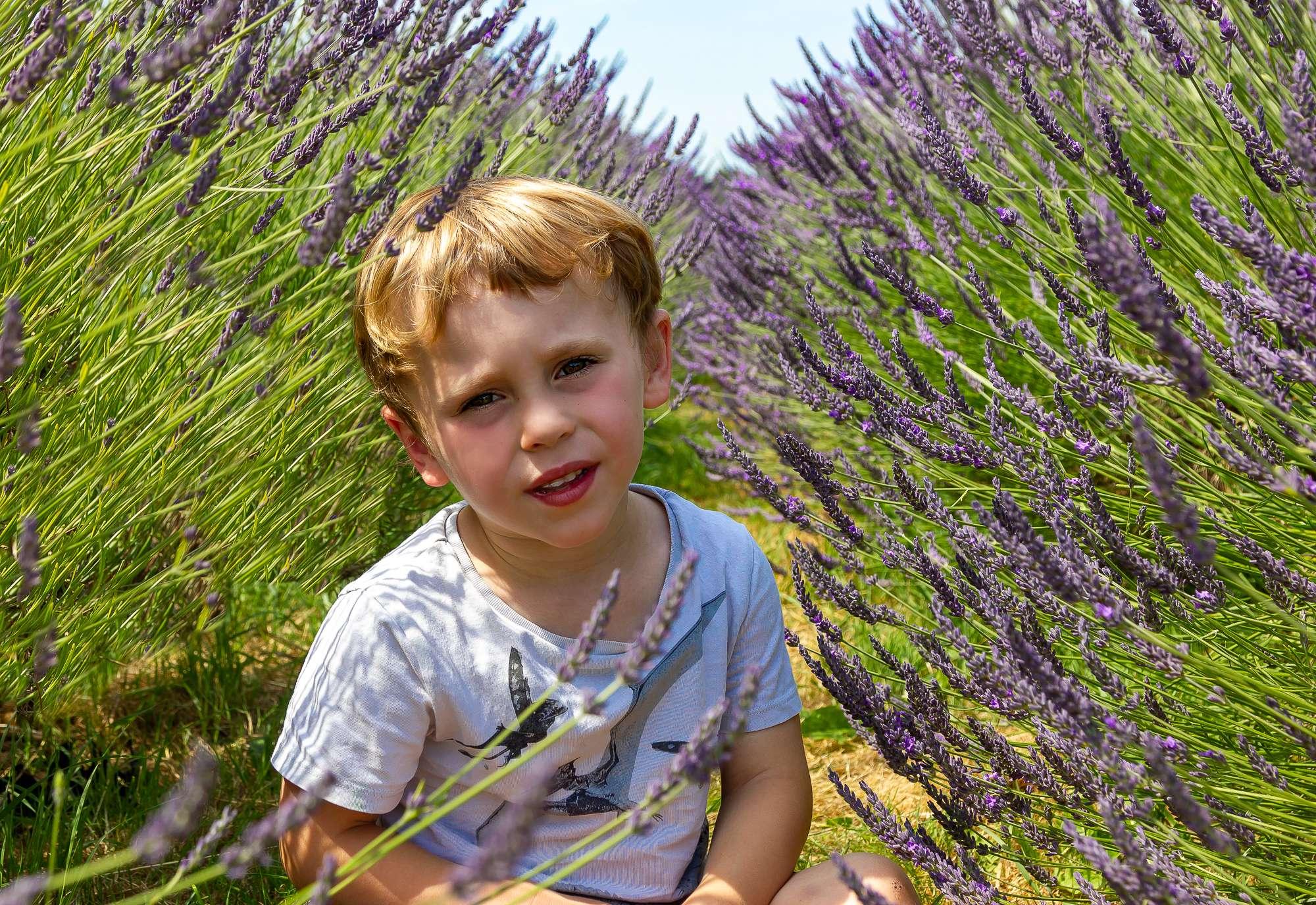 Lavender shoots, family photographer London