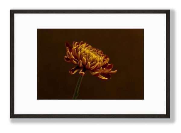 Art Prints, floral art prints