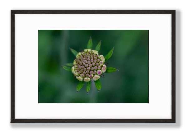 Green Lush, Floral Art Print