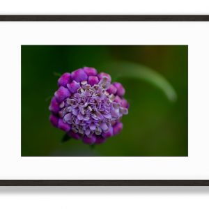Purple Lush Floral Art Print