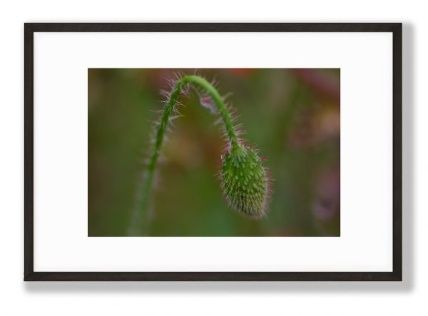 Spiky Lush Floral Art Print